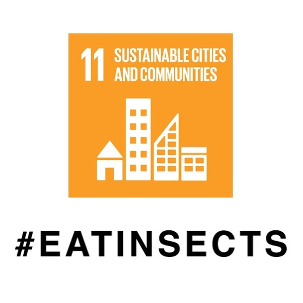 "GUESS WHAT THE SUSTAINABLE CITY OF THE FUTURE LOOKS LIKE? IT IS FARMING INSECTS!  SDG #11 ""Sustainable cities and communities"" means making human settlements inclusive, safe, resilient and sustainable.  By bringing Insect Farming into homes a city's infrastructure can become more decentralised and therefore resilient. Decentralised farming at home enables all kind of people to contribute to their stable and healthy food supply. Demanding only very little space it is the perfect kind of farming for cities, also on a large scale.  #SDGweek #UNSDGS #SustainableCity"