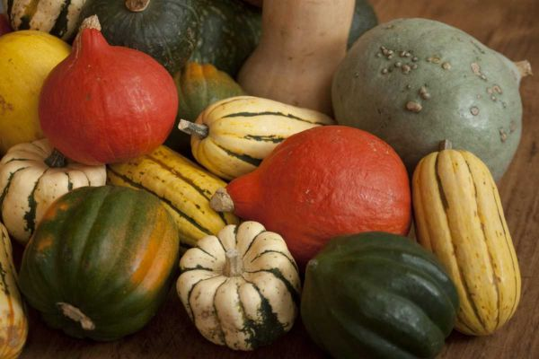 assorted winter squash 2.JPG