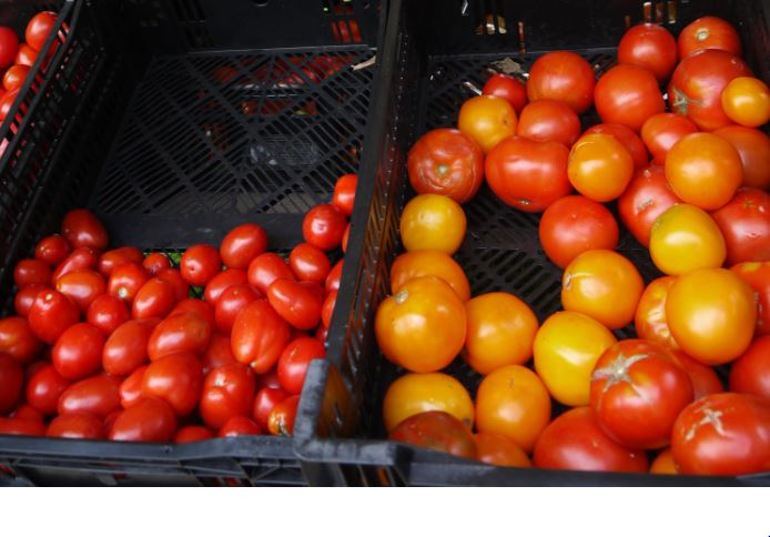 When preserving tomatoes, you get more bang for your buck with plum tomatoes (meaning more can be put in a jar, but I can a mix of tomatoes, whatever I need to preserve.