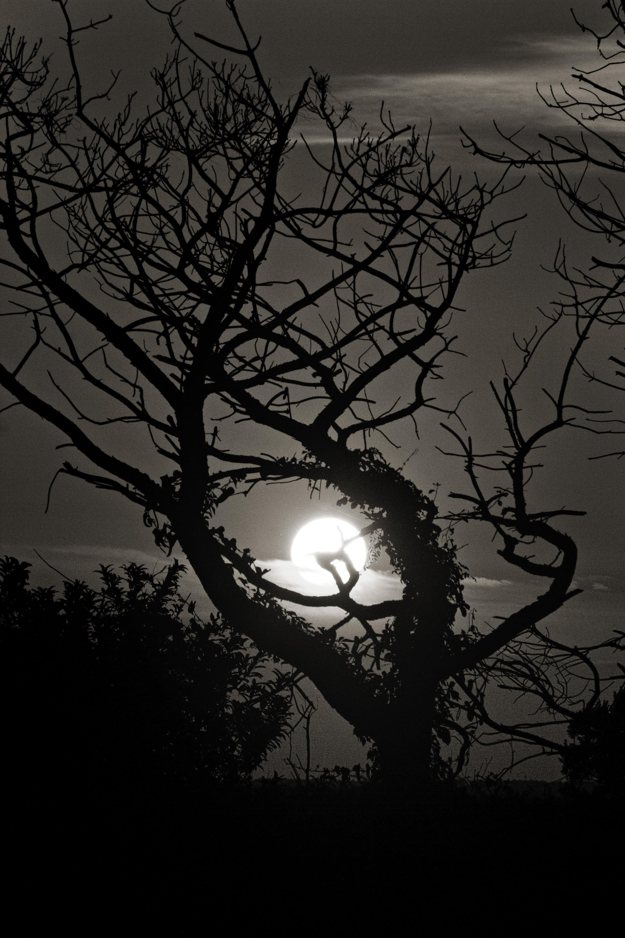 sunset pea island trees.JPG