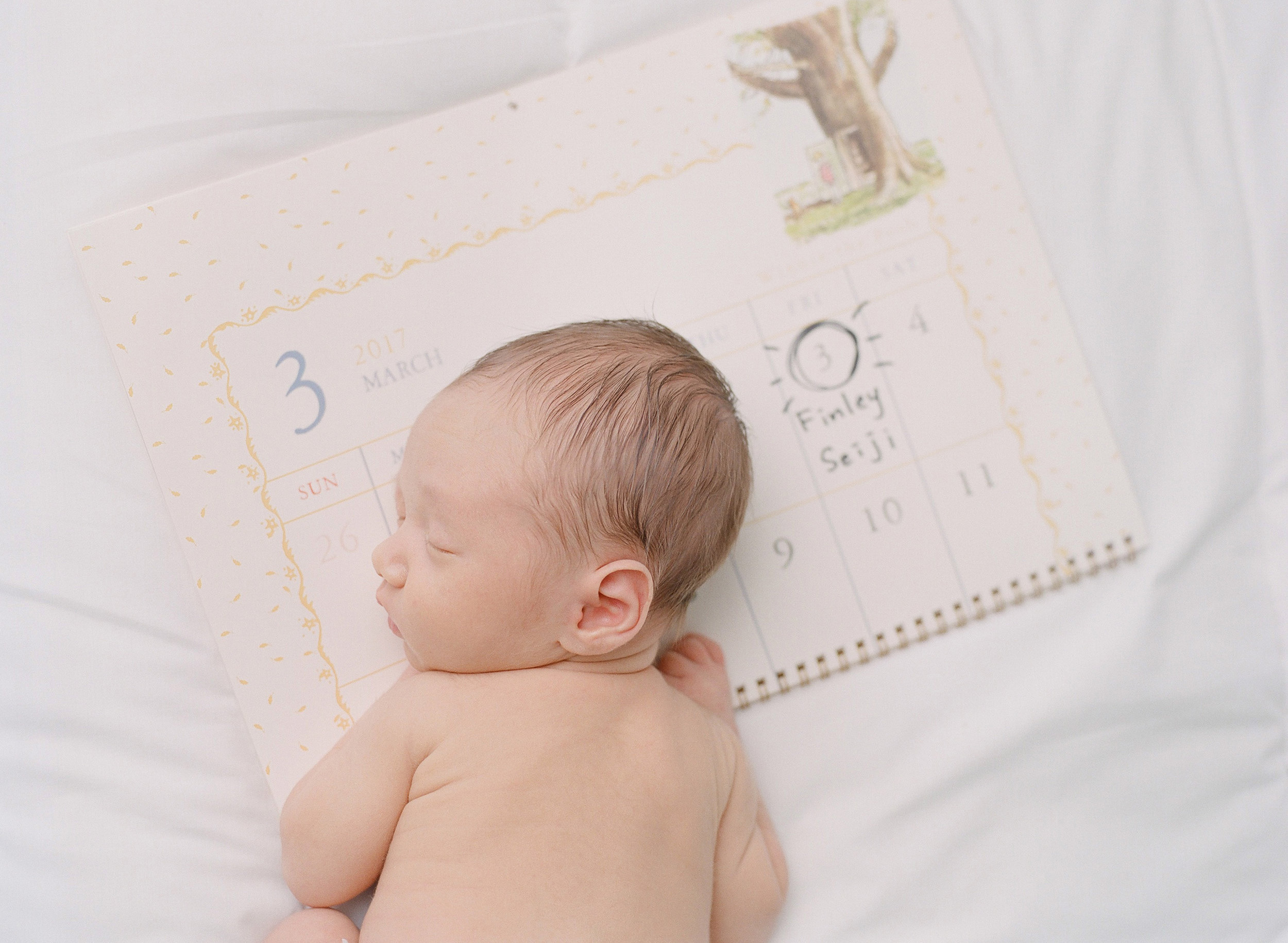 sandra coan seattle newborn baby photographer calendar