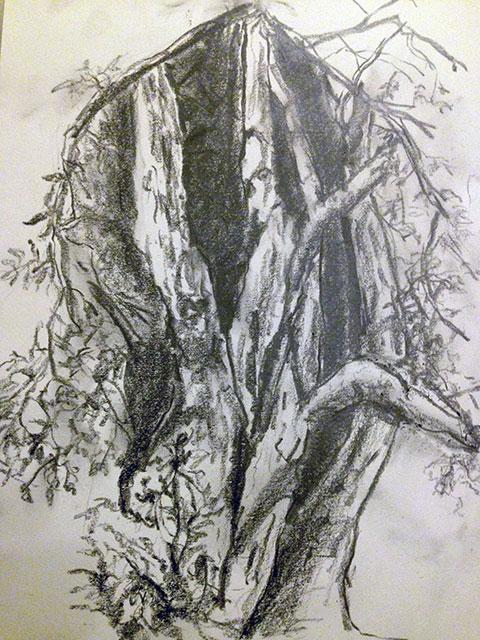 drawing_forestknolls.jpg