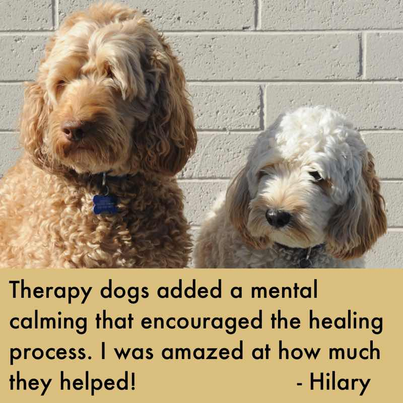 therapy-dogs.jpg