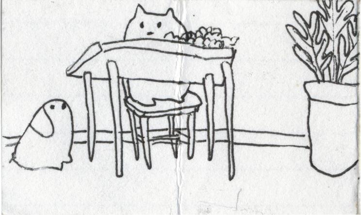 dog+3.jpg