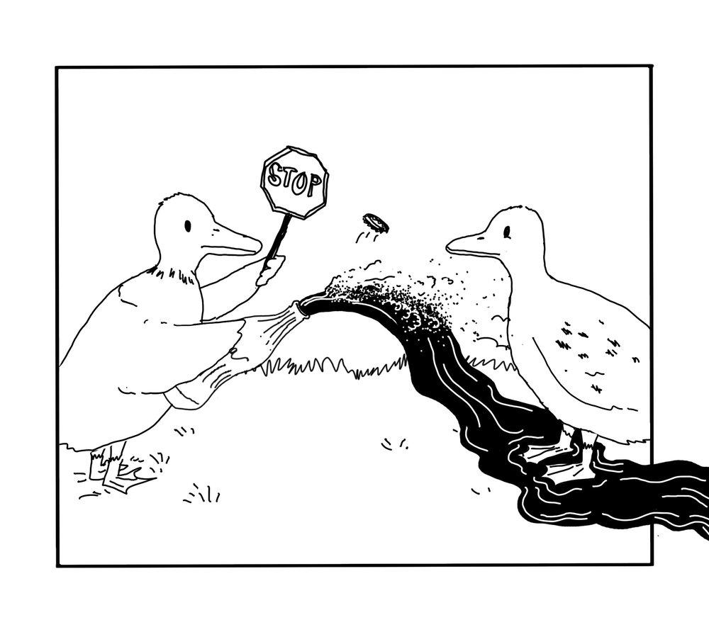 duck+2.jpg