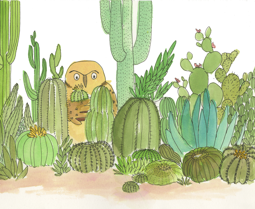 Illustrations for an unpublished book about Powell & his cactus