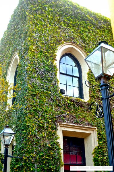 Charleston, ivy covered home