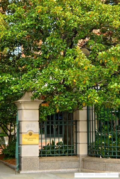 charleston entrance with magnolia
