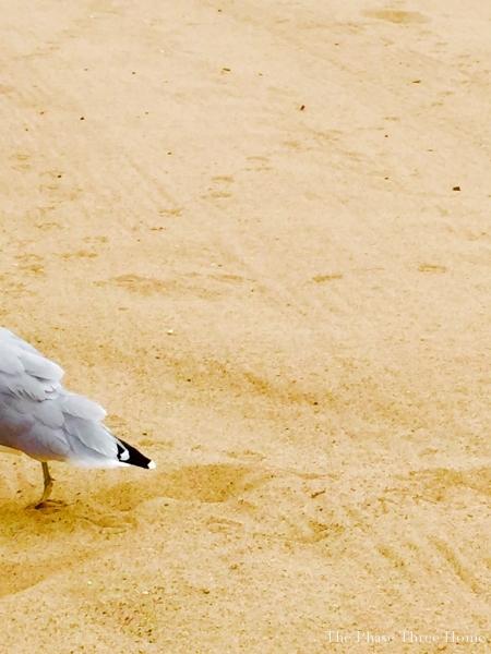 seagull, wilmette IL
