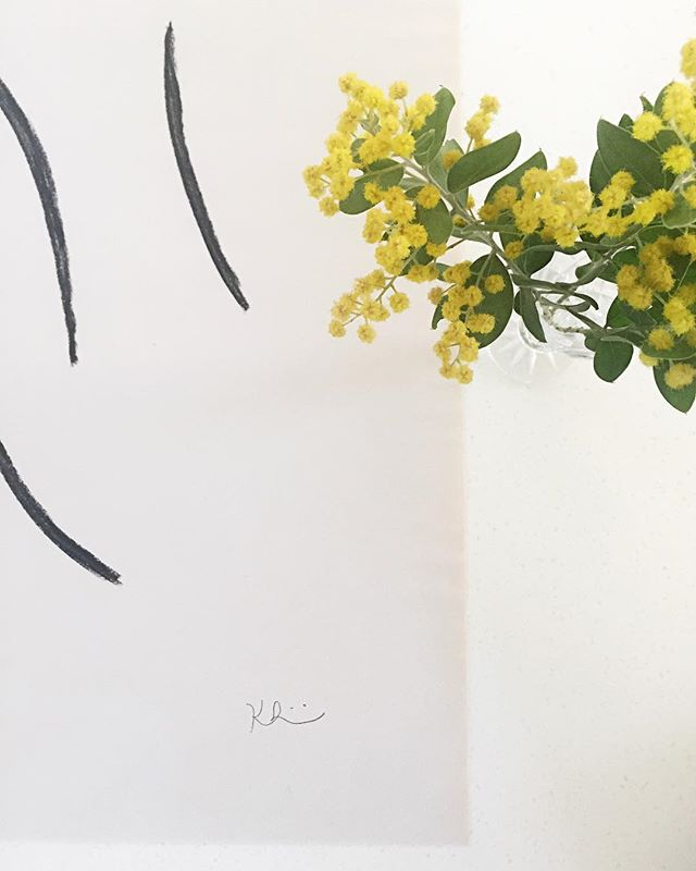 The very last of the wattle blossoms. Spring is peeking through the cracks.
