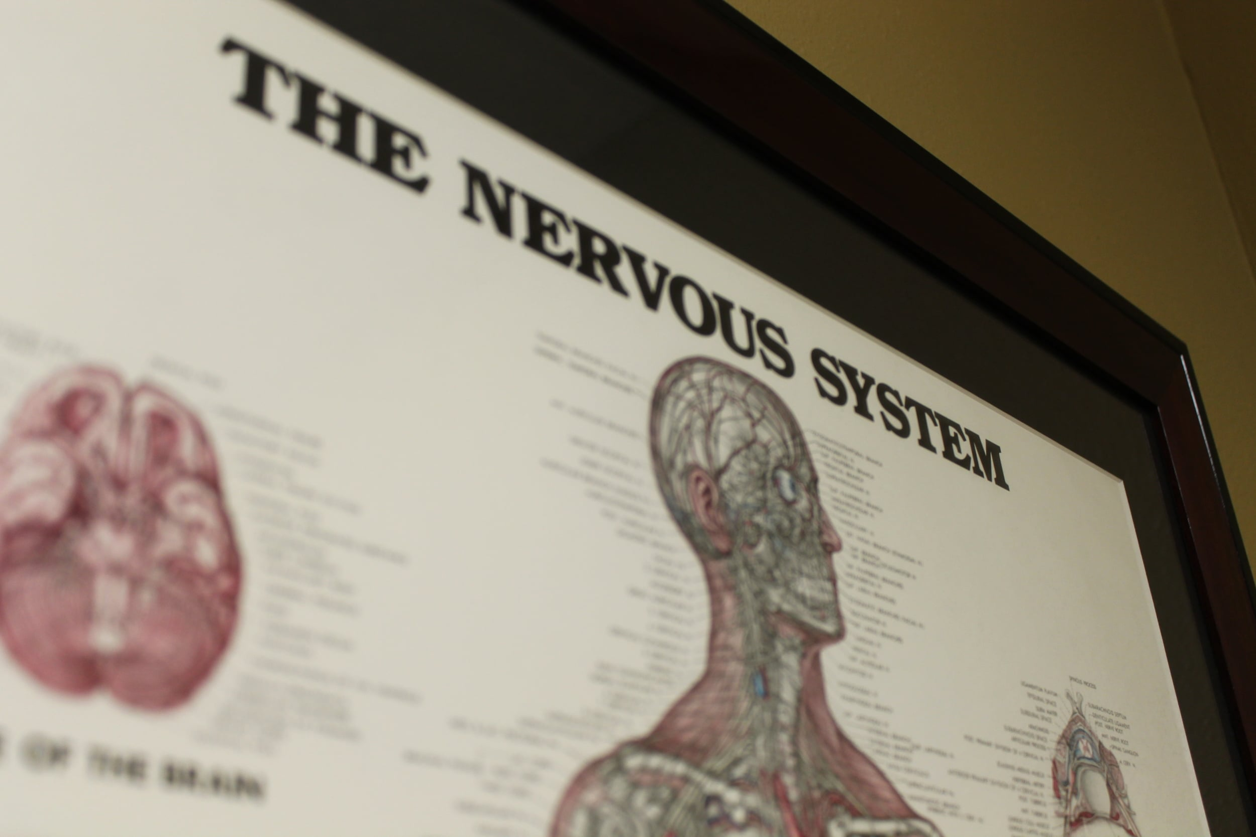 Experts of the Nervous System