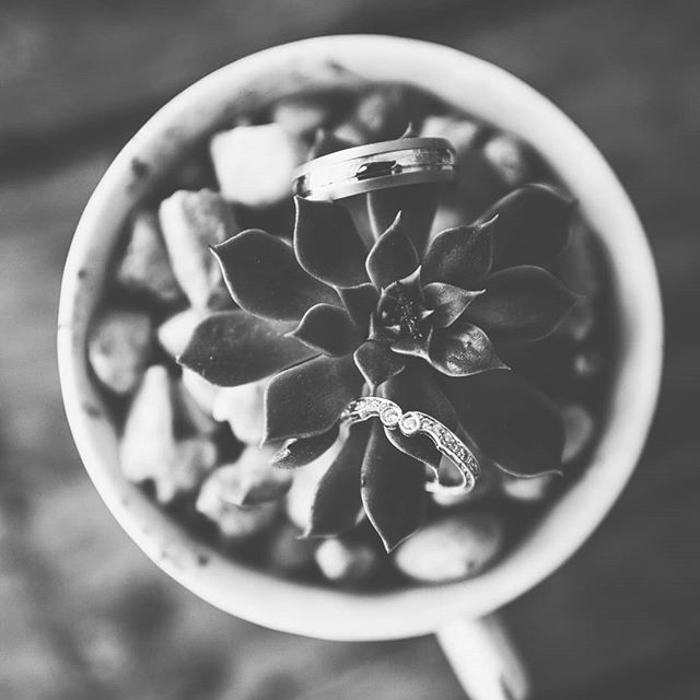Okay so I'm a little obcessed with #succulents lately. Can you blame me?? Look at it!! Zach and Olivia had the best succulents... #rings #plants #weddingphotography #blackandwhite