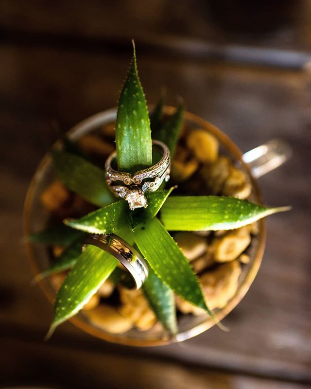 Succulents make rings look GOOD. Zach and Olivia had some really cool #succulents at their wedding.  #ring #rings #plants #wedding #weddingphotography
