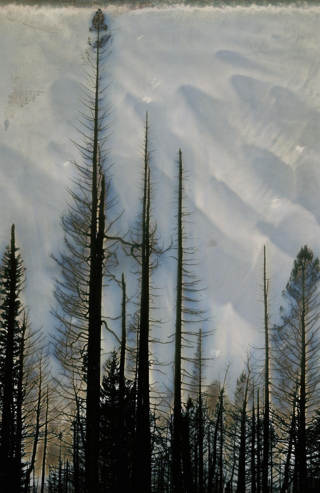 burn_trees_1.png