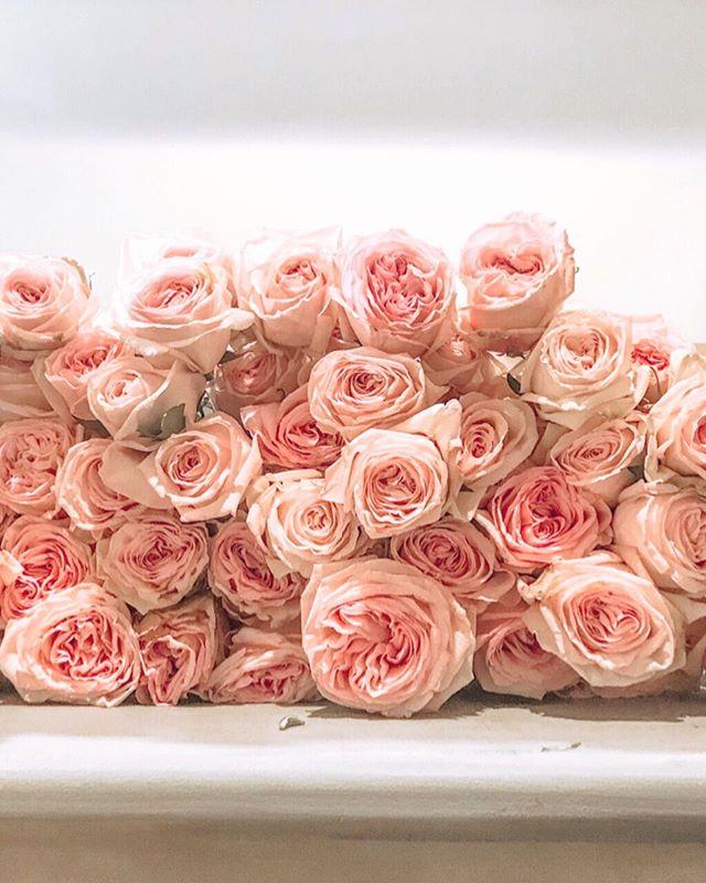 A little taste of what we're working with for this weekend! So many roses and I'm loving it! ⠀⠀⠀⠀⠀⠀⠀⠀⠀ #wedding #weddingseason #weddingday #weddingplanner #atlantaweddingplanner #southernwedding #southerncharm #southern #bride #groom #brideandgroom #bridal #georgiawedding #weddingdetails #weddingdesign #weddingflowers #flowers #flowersofinstagram #roses #gardenroses #atlantabride #atlantaflorist #pursuepretty #instaflowers #thatsdarling #engaged #weddinginspo #ido #floraldesign #florist