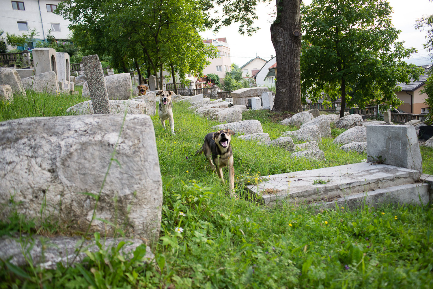 The Jewish Cemetery in Sarajevo is the second largest in Europe, after that of Prague. It was opened in 1630 and closed to burial in 1966. During the siege of Sarajevo, the cemetery was on the front lines and was used as an artillery position for Bosnian Serbs.