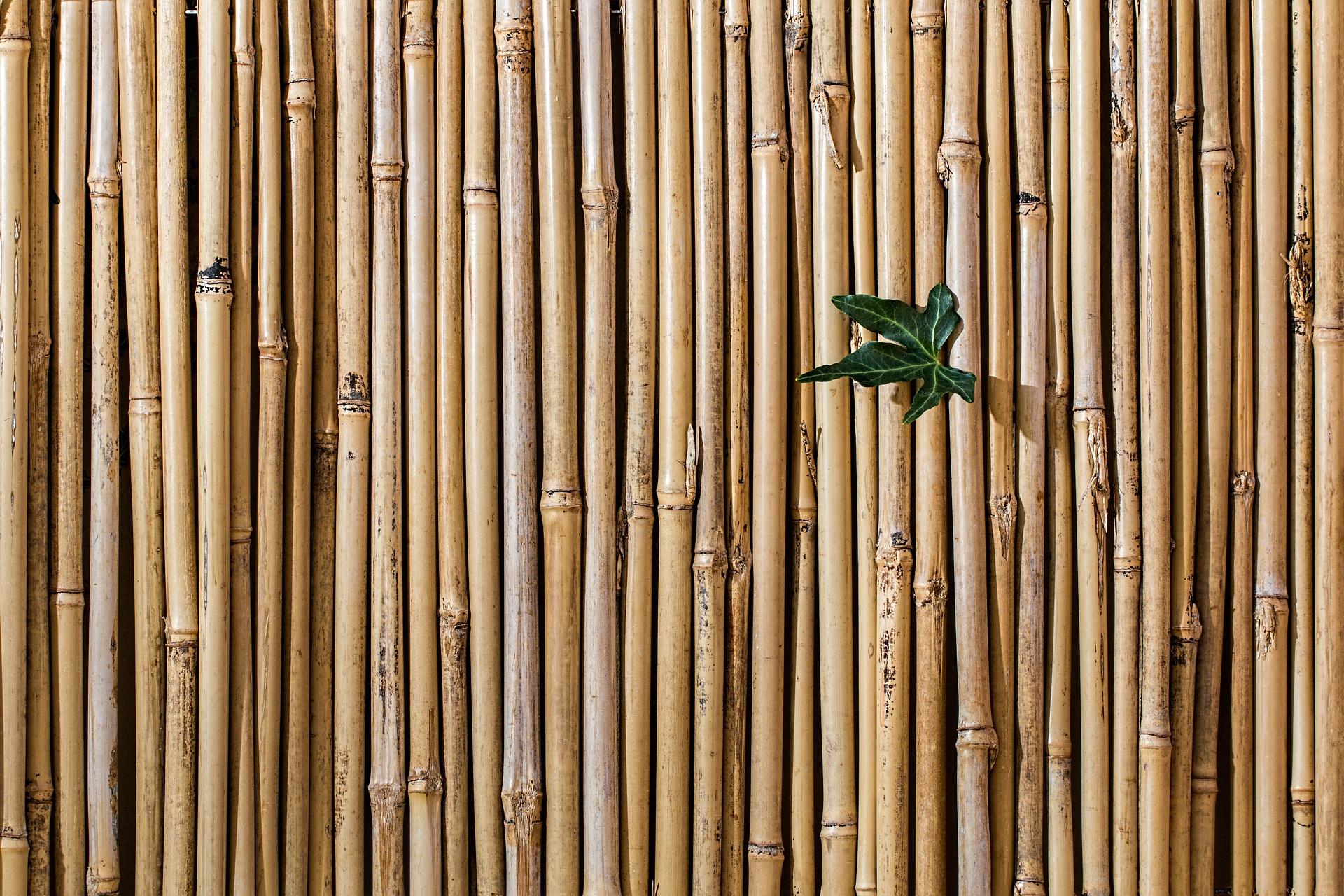 bamboo-2429954_1920.jpg