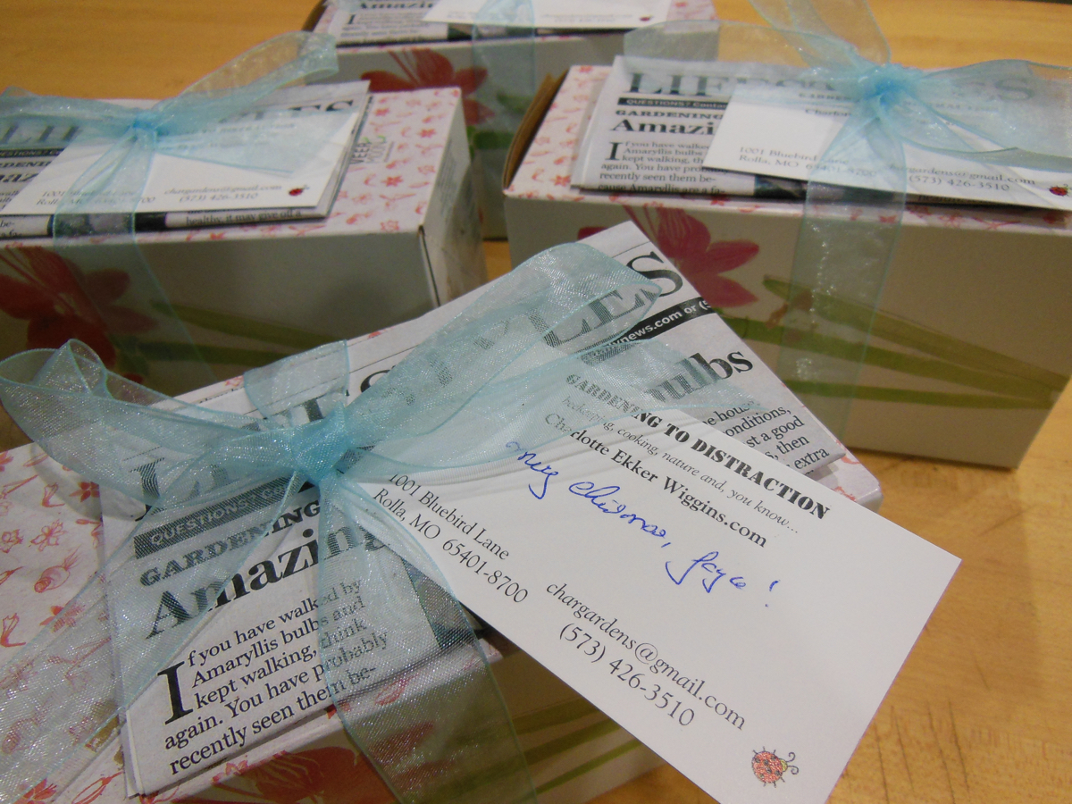 Boxed amaryllis bulbs with Gardening to Distraction article copies ready for gift-giving.