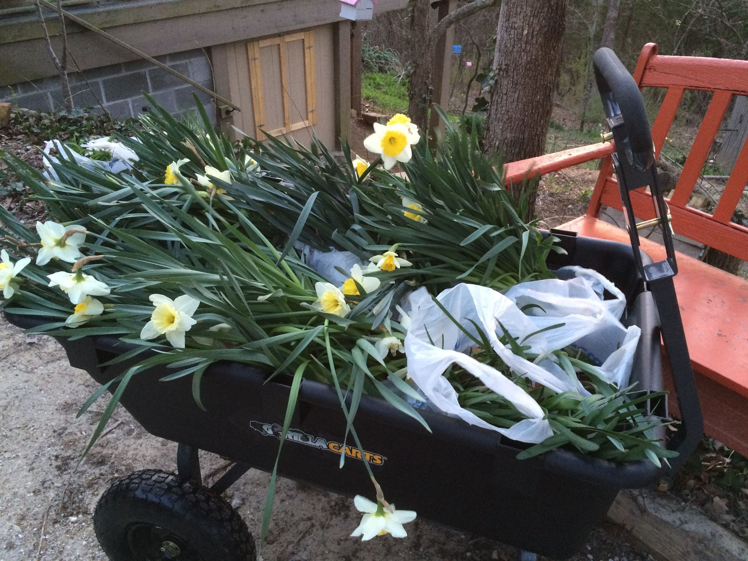My new gardening cart has an adjustable handle and moves on its axel like a dump truck.