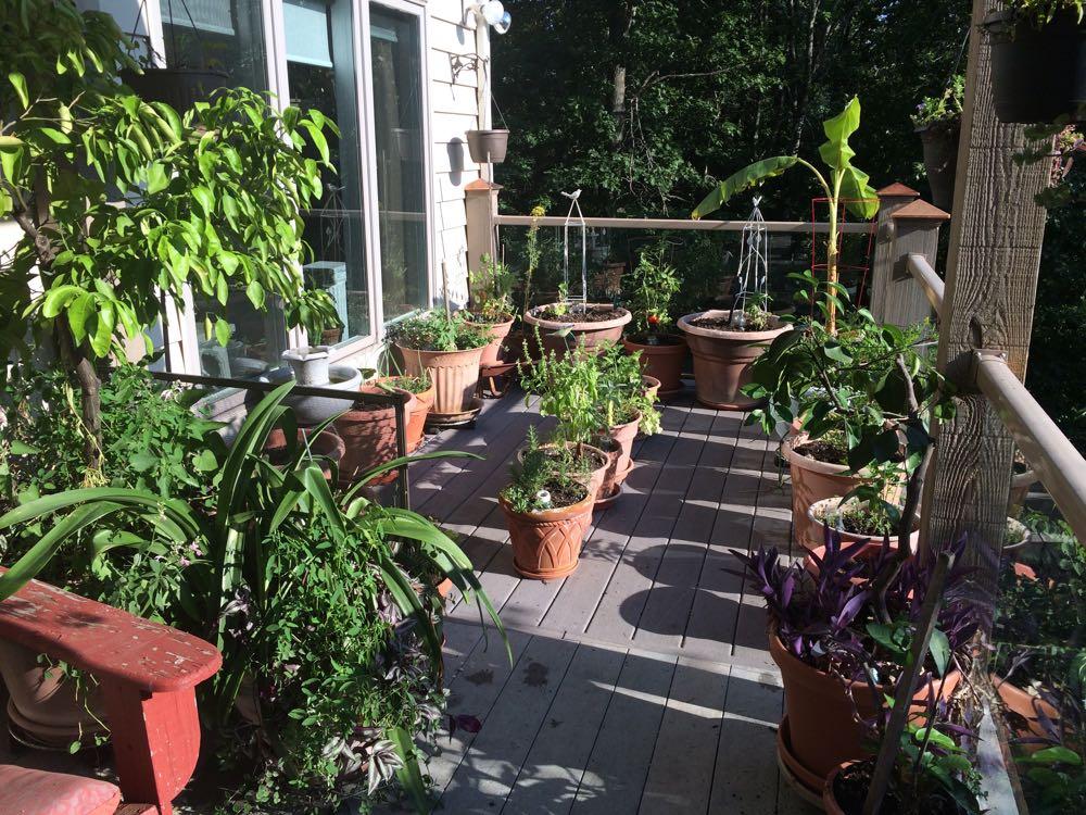 My little deck garden ready for a hot Missouri summer - sort of.