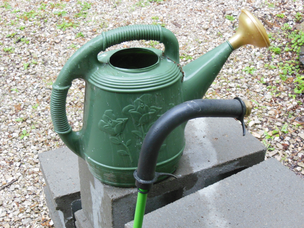 A watering can simulating rain is less effective than a deep watering wand.