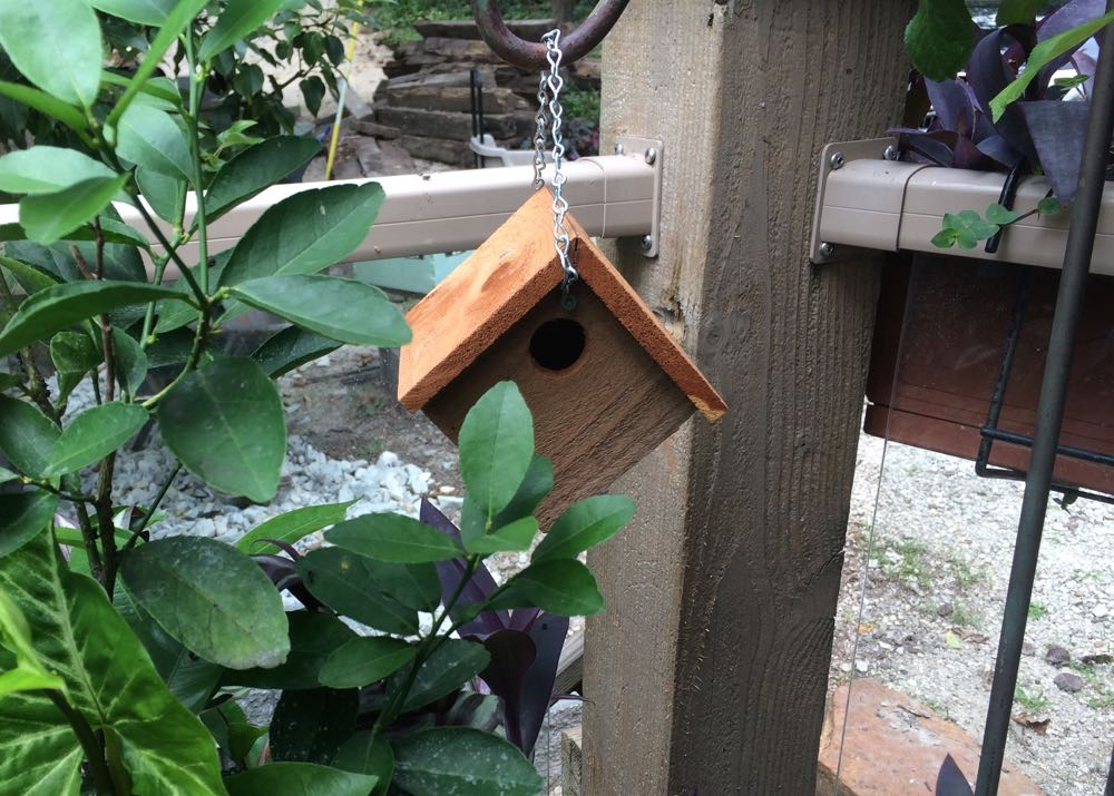 The new wren house installed and ready to welcome a new bird, should she decide to move in.
