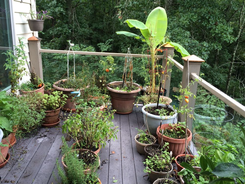 My deck garden full of pots at the end of August 2016. It was a very hot summer!