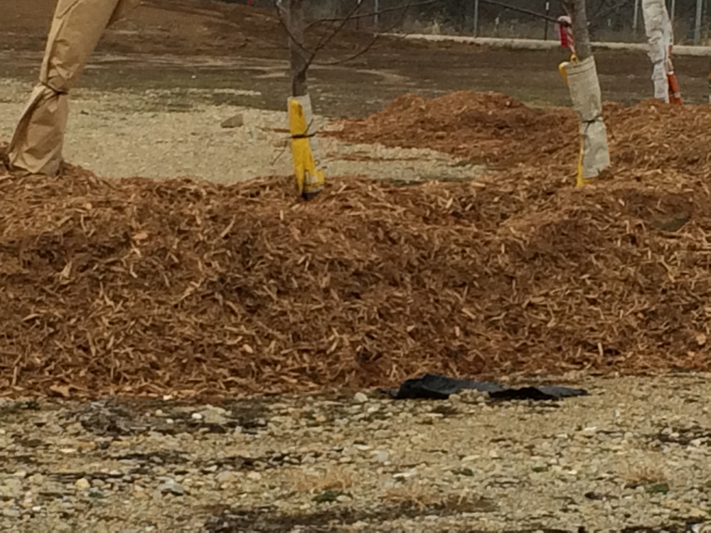 Pile mulch around unplanted trees a good 3-4 feet high during winter.