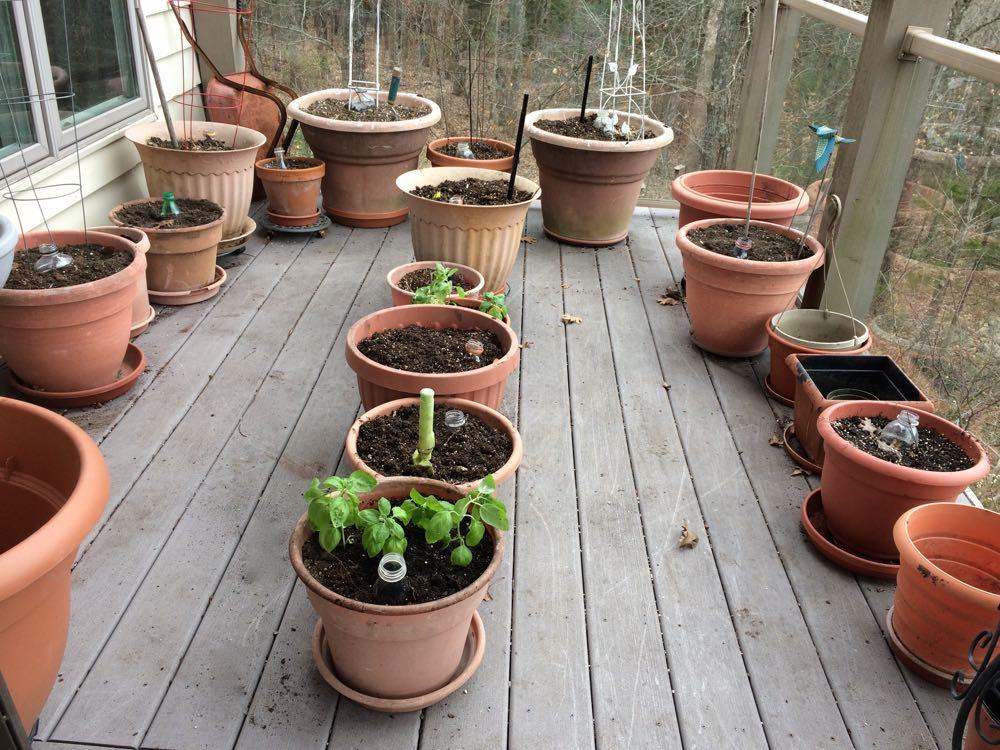 The beginning of my deck garden at Bluebird Gardens.