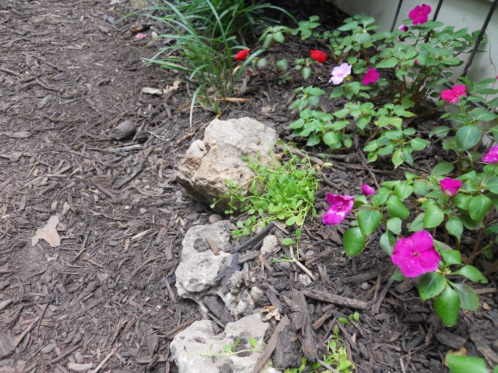 Left, new mulch works well to kill off unwanted plants under paths. Aged mulch, right, is a necessity in Missouri summers to keep garden beds cool during hot weather.