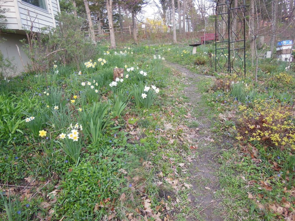 I have photos of my garden in spring to remind me what is planted where.