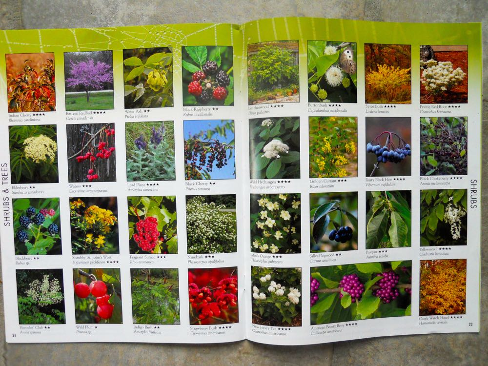 Favorite Wildflowers Catalog