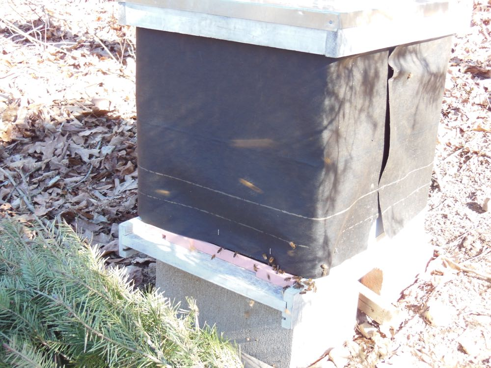 Here's a closer look of one of my hives with bees taking cleansing flights.