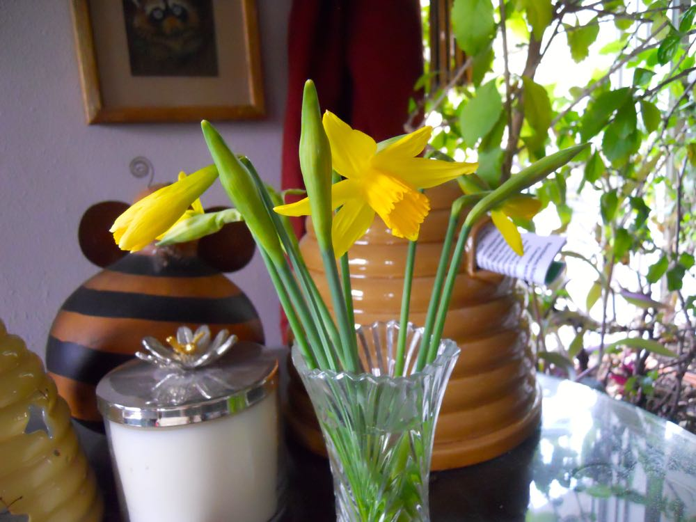 The first early daffodils have started to bloom, a sure sign spring is just around the corner.