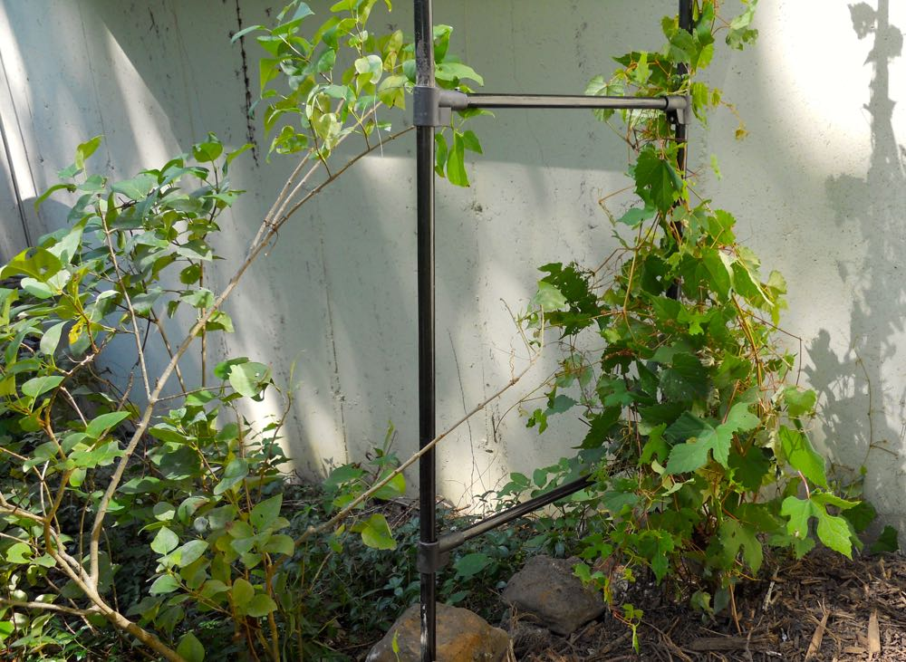 Fall is a good time to scope out where garden structures will add support for nearby growing plants. I can't relocate or kill this wild grapevine so now up it goes! (Photo by Charlotte Ekker Wiggins)