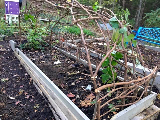 The raspberry cedar trellis borders the front of a soon to be raised garden bed. (Photo by Charlotte Ekker Wiggins)