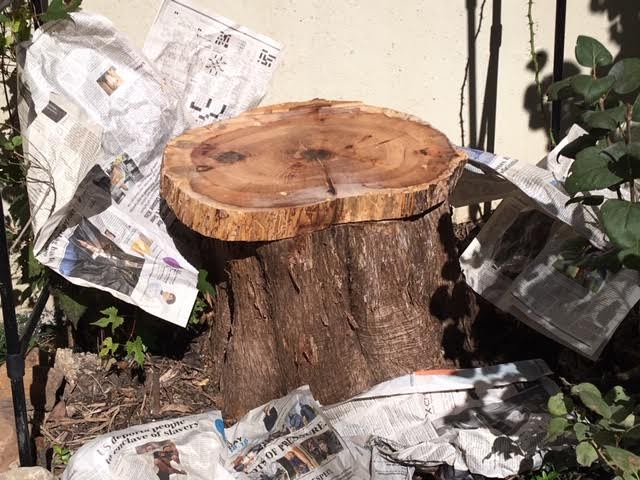 cedar tree stump seat first coat.jpg
