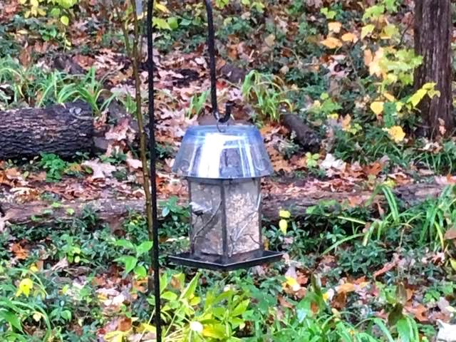 Can you guess that this bird feeder top is homemade? (Photo by Charlotte Ekker Wiggins)