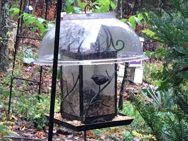 One of the plastic bowls now keeping bird seed dry. (Photo by Charlotte Ekker Wiggins)