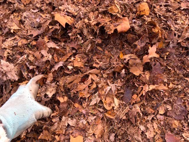 Shredded and unshredded leaves are a good combination. (Photo by Charlotte Ekker Wiggins)