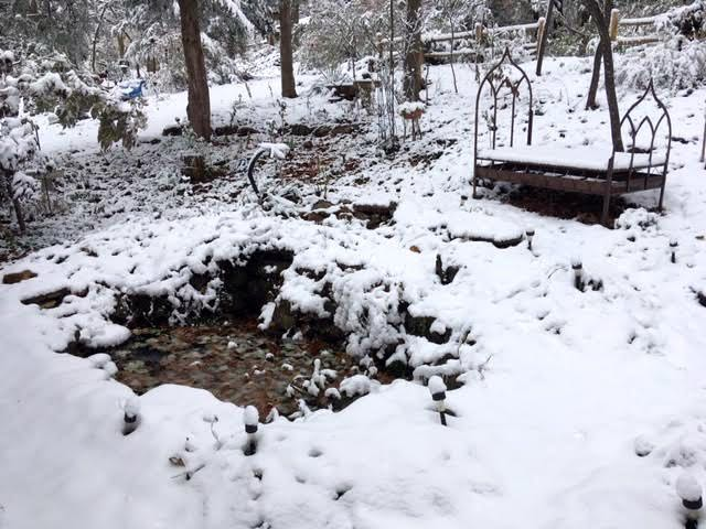 Pond water doesn't freeze after the first snow. (Photo by Charlotte Ekker Wiggins)