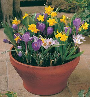 A typical bulb garden in a tapered pot. Is that the right pot to choose?