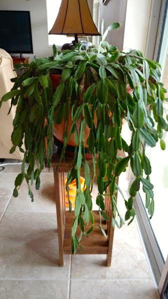 Mystery Plant 1.jpg