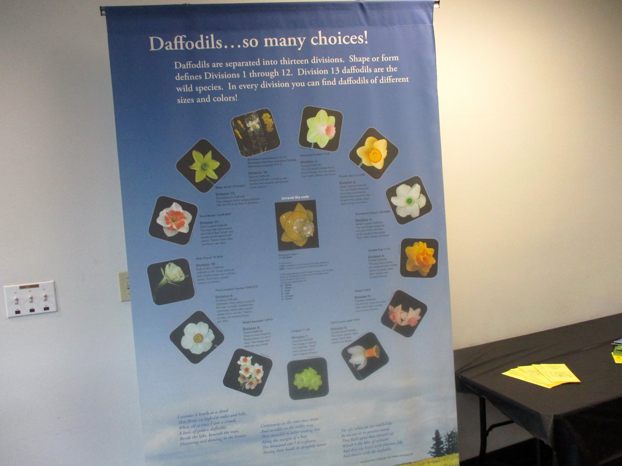 A Daffodil Society poster with the 13 different daffodil categories. (Photo by Charlotte Ekker Wiggins)