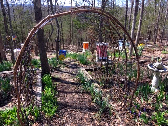 This double cattle panel arbor guides me into my north apiary. (Photo by Charlotte Ekker Wiggins)