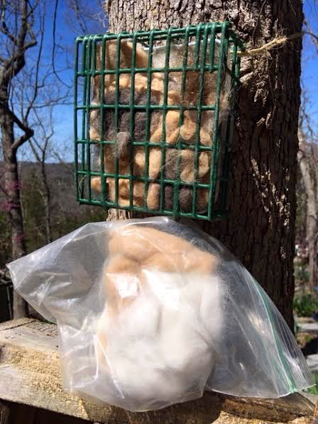 Suet holder has been re-filled with another batch waiting to be added. (Photo by Charlotte Ekker Wiggins)