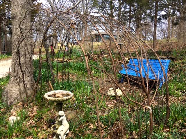 Once seated on the garden bench, the view is to my north apiary. (Photo by Charlotte Ekker Wiggins)