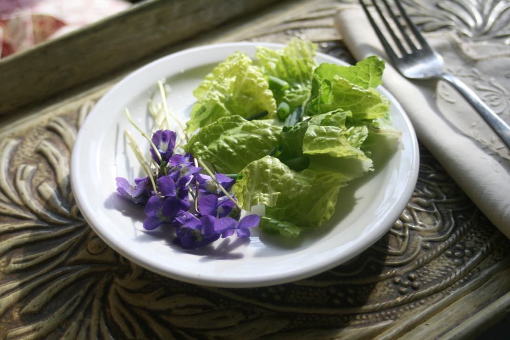 Wild violets from non-chemical treated spot in my garden, ready for lunch. (Photo by Charlotte Ekker Wiggins)