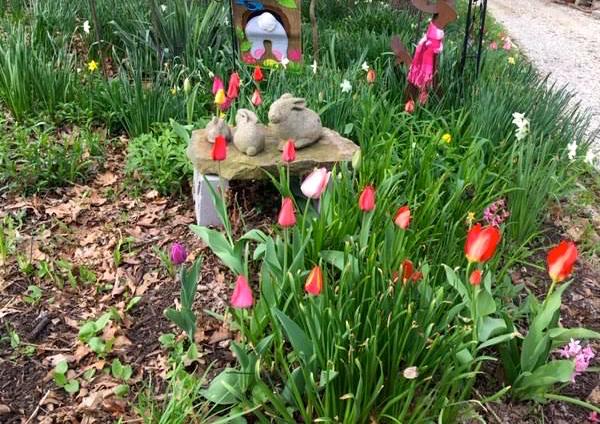 Tulips In Missouri Spring Garden Tips Gardening Charlotte