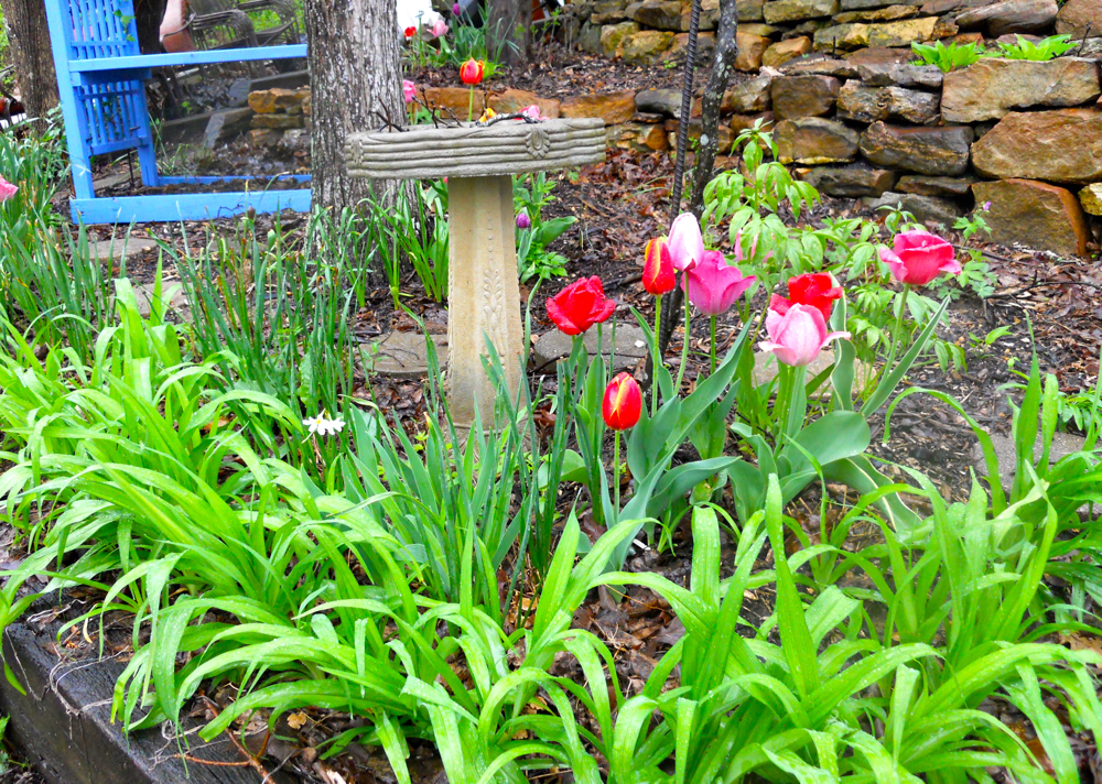 A group of tulips in my Uncle Tony's memorial bench area. (Photo by Charlotte Ekker Wiggins)